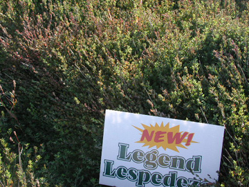 cutting edge, legend lespedeza, tonnage,legume,seed,wildlife,deer,quail,wild turkey,cutting-edge products,pasture,cattle,livestock